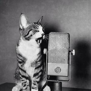 Singing Cat